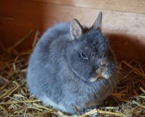 Support An Animal - Island Community Haven CIC - Rabbits