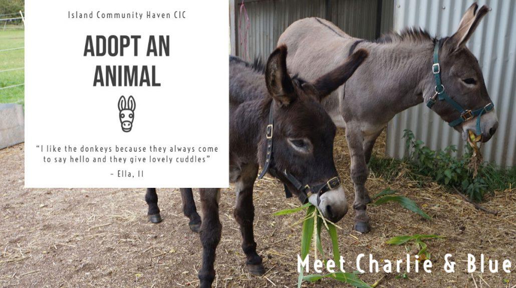 Island Community Haven CIC - Donkeys Charlie & Blue