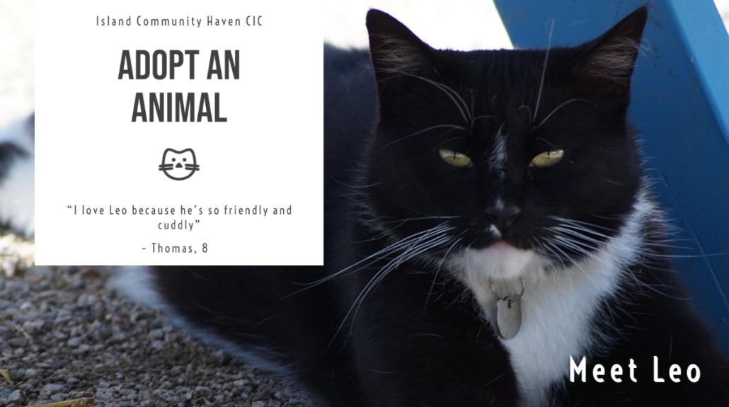 Island Community Haven CIC - Leo the farm cat