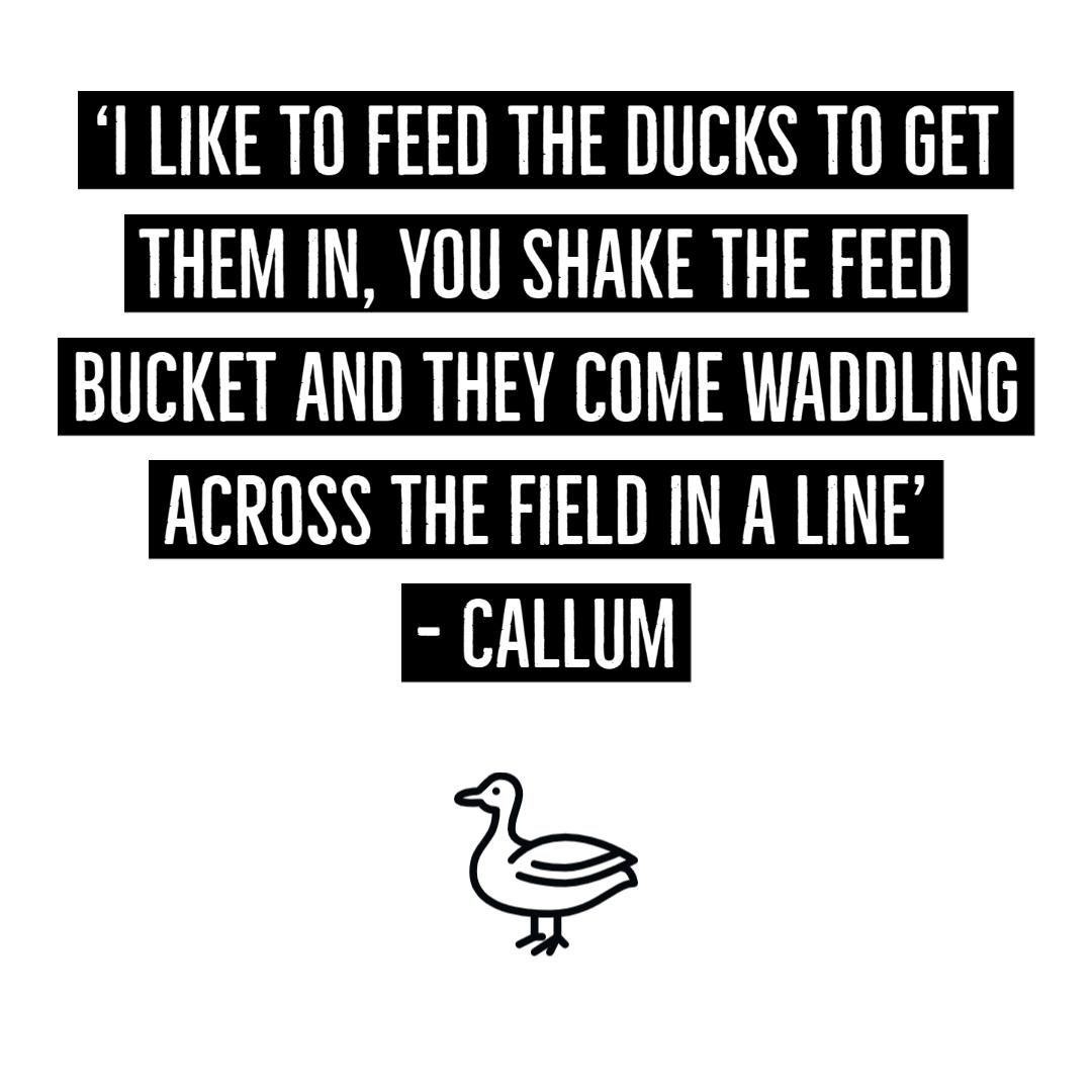 Island Community Haven CIC - Callum- Ducks